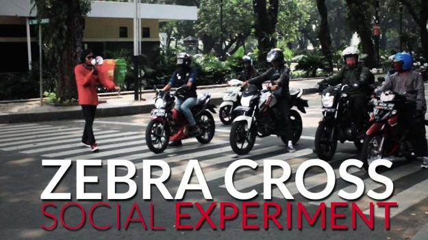 Zebra Cross (Social Experiment) - VectroID