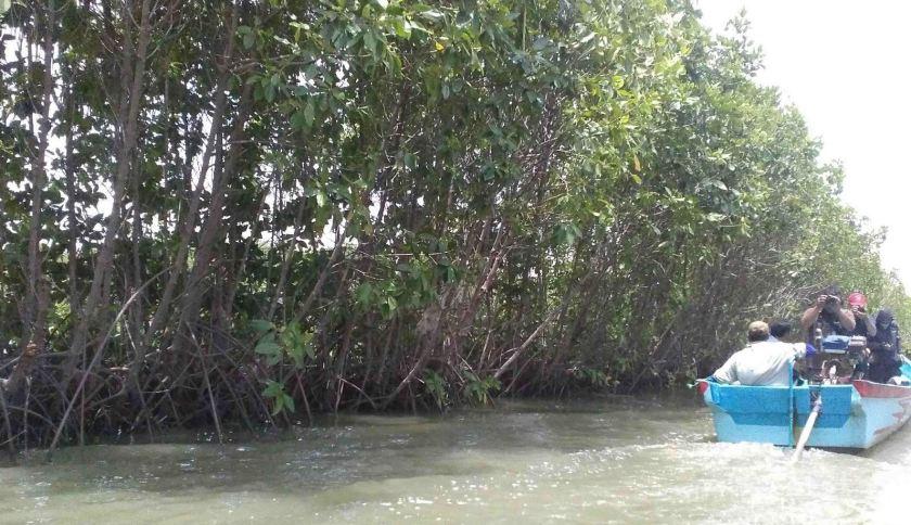 Sungai Tayep dan Mangrove