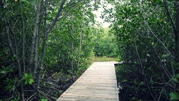 Zona mangrove Pulau Hantu