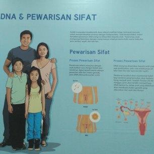 Pengetahuan DNA