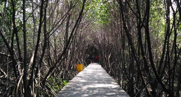 Lorong Mangrove, cocok dijadikan Catwalk Fashion Show