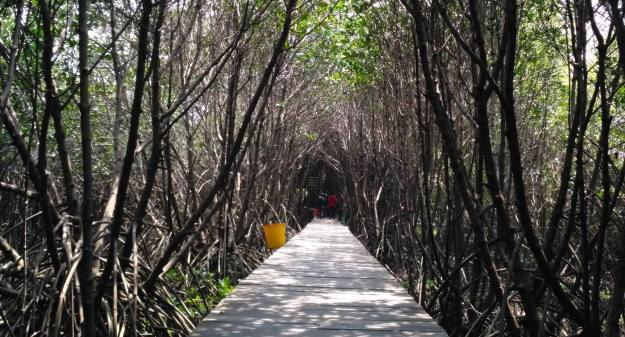 Lorong Mangrove, cocok dijadikan Catwalk Fashion Show