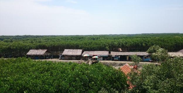Pemandangan Hijau Mangrovesari
