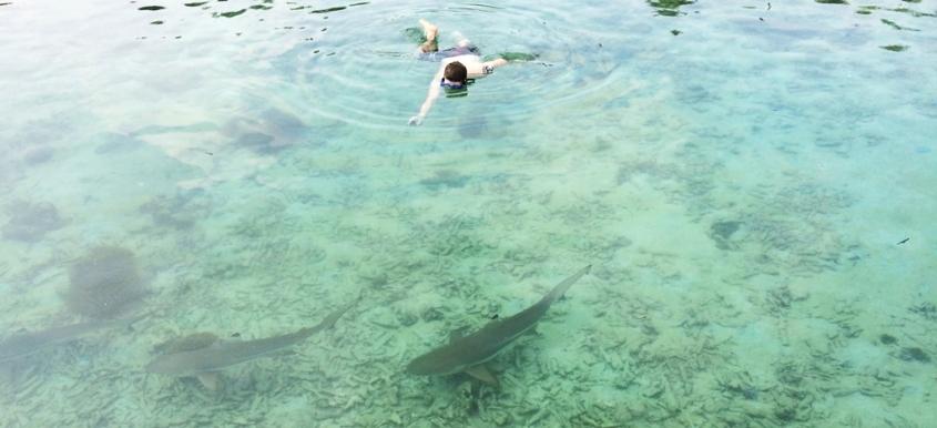 Berenag bersama hiu di Pulau Menjangan Besar
