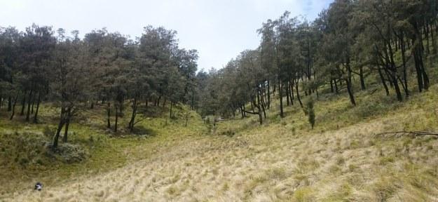 Savana Gunung Lawu
