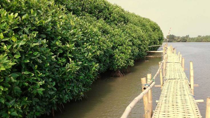 Hutan Mangrove Pantai Congot